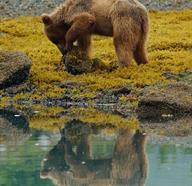 Things To Do In Alaska, United States