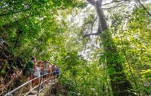 Explore all tours in Jaco