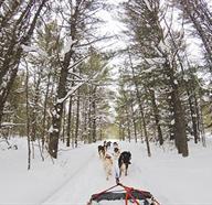 Tours En Trineo De Perros En Alaska, Estados Unidos