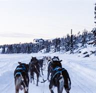 Dog Sledding Tours In Alberta, Canada