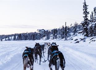 Alberta, Dog Sledding Tours