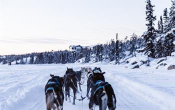 Things To Do In Alberta: Dog Sledding Tours