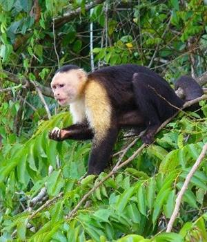 Monkey Island Tours, Panama City, Monkey Island Tours