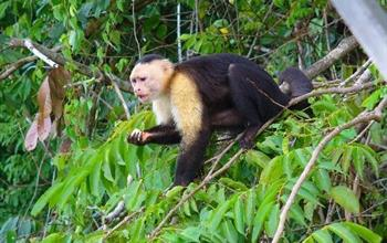 Things To Do In Panama City: Monkey Island Tours