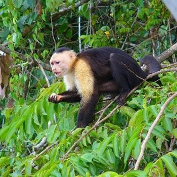 Monkey Island Tours, Panama City, Panama