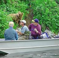 Wildlife Experiences In Alaska, United States