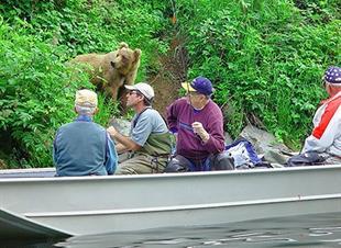 Alaska, Experiencia de Vida Silvestre
