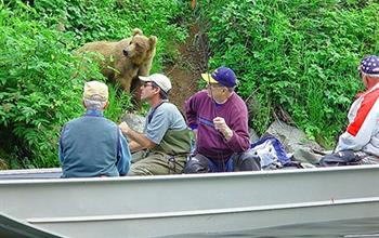 Things To Do In Alaska: Wildlife Experiences