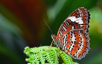 Things To Do In Monteverde: Wildlife Experiences