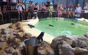 Things To Do In Perth: Wildlife Experiences