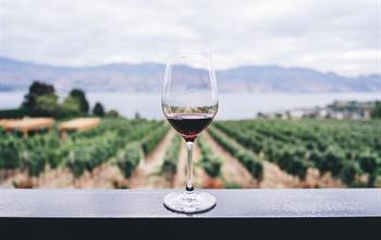 Things To Do In Wanaka: Wine Tours