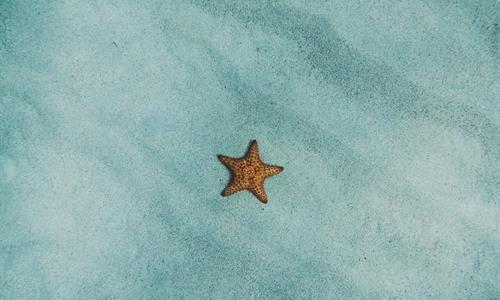 Temporada húmeda la mejor para ver las estrellas del mar
