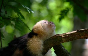Monkey Island Tours in Panama: Frequently Asked Questions
