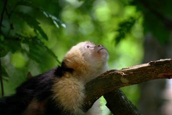 Tours a la Isla de Los Monos en Panamá: Preguntas Frecuentes