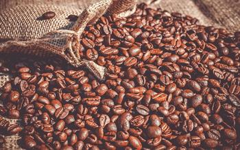 Things To Do In Honduras: Coffee Tours