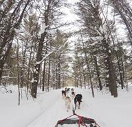 Dog Sledding Tours In Canada