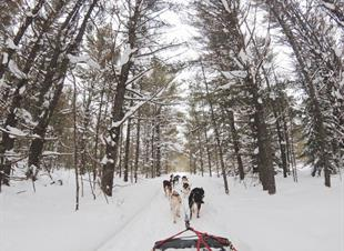 Canada, Dog Sledding Tours