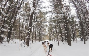 Things To Do In Canada: Dog Sledding Tours