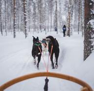 Dog Sledding Tours In United States