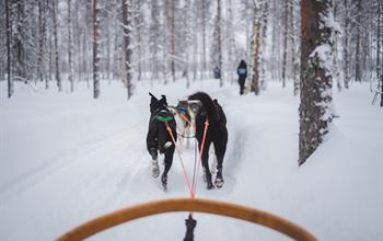 Things To Do In United States: Dog Sledding Tours