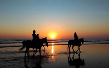 Things To Do In Panama: Horseback Riding Tours