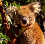 Wildlife Experiences In Australia