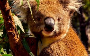 Things To Do In Australia: Wildlife Experiences