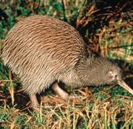 Wildlife Experiences In New Zealand