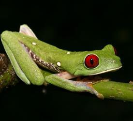 2-Hour Frog Watching Night Tour