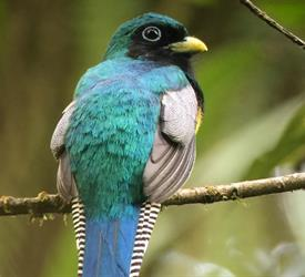 4-Hour Bird Watching Tour, Wildlife Experiences in Costa Rica