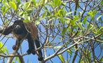 Monkey, 4-Hour Bird Watching Tour