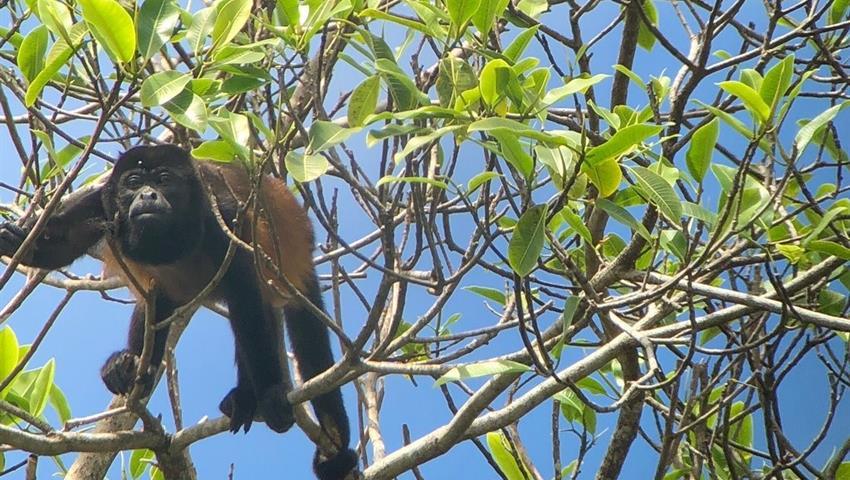Monkey, 4-Hour Bird Watching Tour