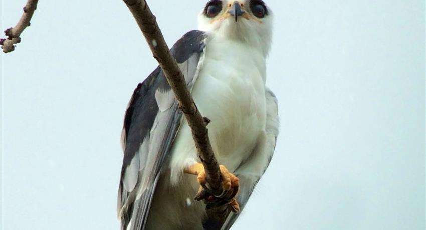 Birb, 4-Hour Bird Watching Tour