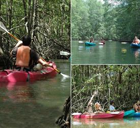 4-Hour Mangrove Kayaking Tour