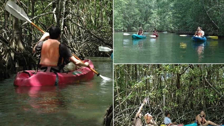mangrove, 4-Hour Mangrove Kayaking Tour