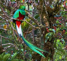 5-Hour Bird Watching Tour, Wildlife Experiences in Costa Rica