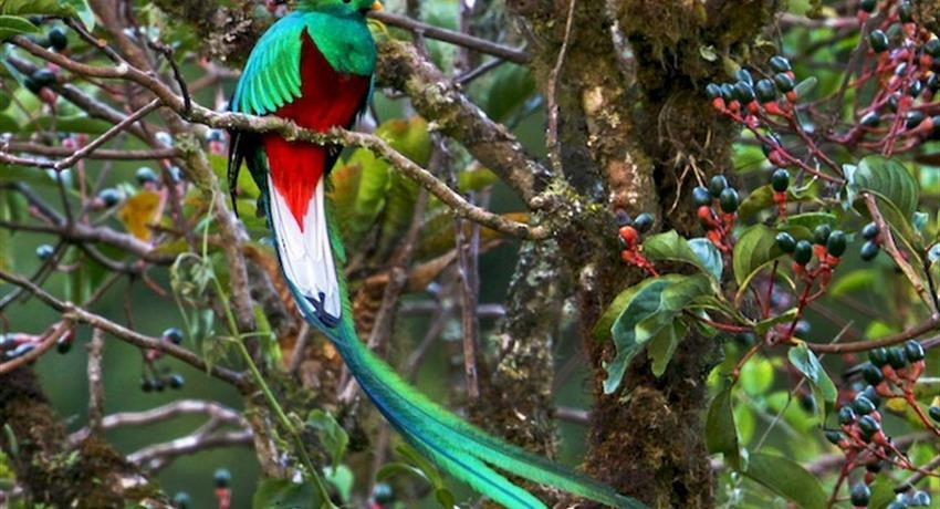 Quetzal, 5-Hour Bird Watching Tour