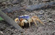 Crap, 7-Hour Tour Cahuita National Park