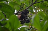 Monkey, 7-Hour Tour Cahuita National Park