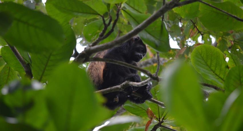 Monkey, 7-Hour Tour Cahuita National Park