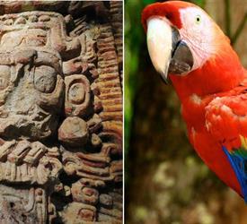 Viaje a Copán desde Antigua