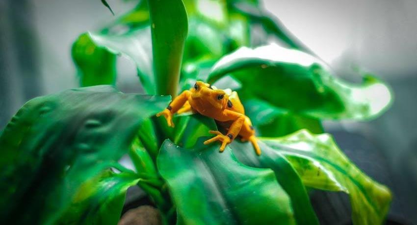 Animal Frog Forest Panama, Tour De Un Día Completo En El Valle De Antón Desde Hoteles de Playa
