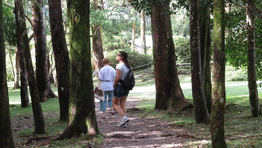 Wild Panama Forest Anton Valley, Anton Valley Full Day Tour From Beach Hotels