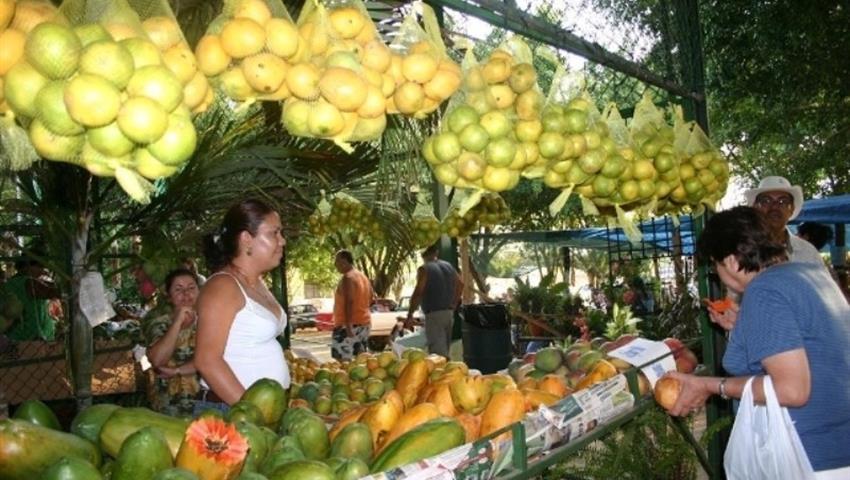 5, 7 in 1 Puntarenas Highlights tour