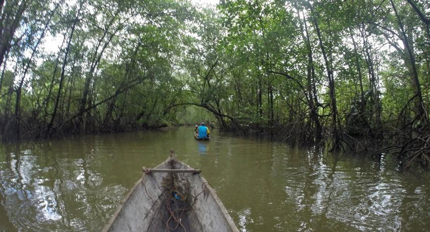 crossing the mangrove - tiqy, Bat Cave Immersion