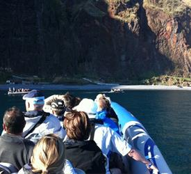 Bird, Whale and Dolphin Watching, Wildlife Expereinces in Madeira, Portugal