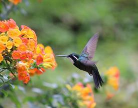 Tour de Avistamiento de Aves