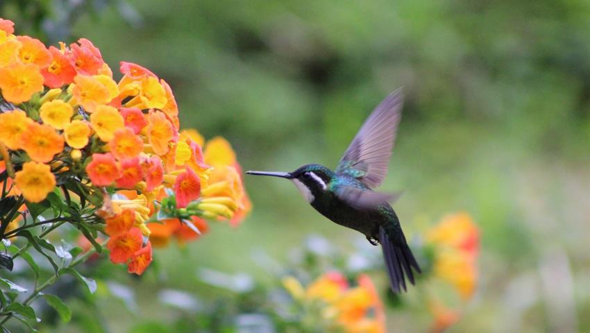 1, Birdwatching Tour