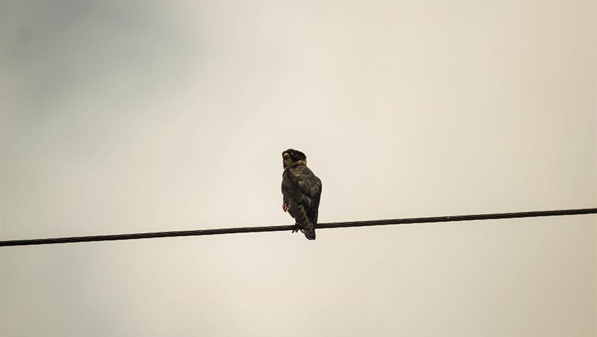 2, Birdwatching Tour
