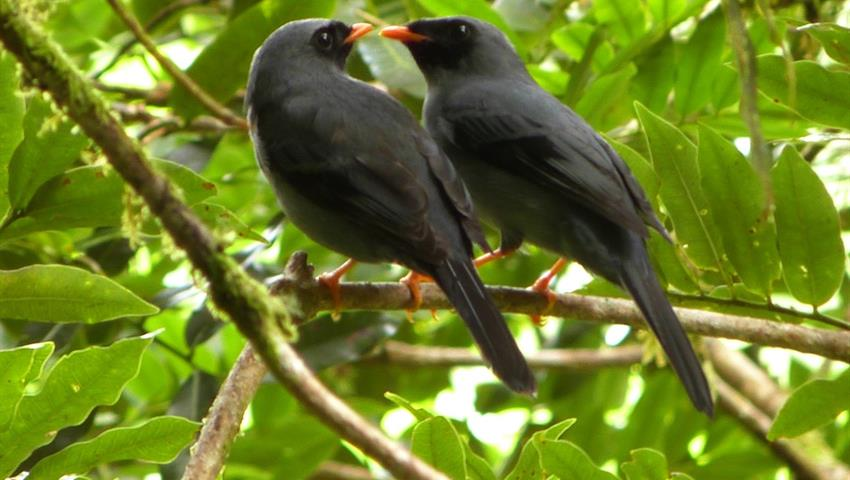 5, Birdwatching Tour